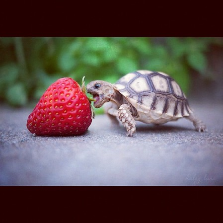 #turtle  Instagram