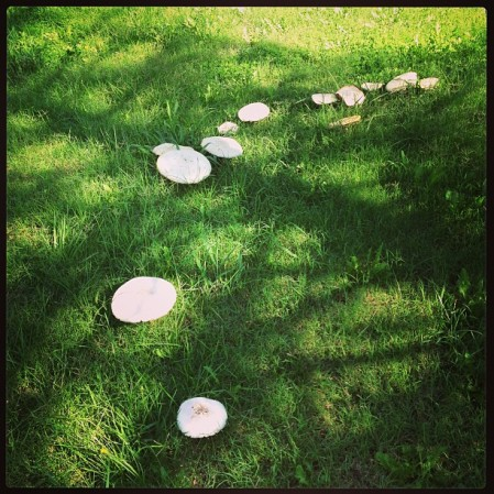 #mushrooms  - Instagram