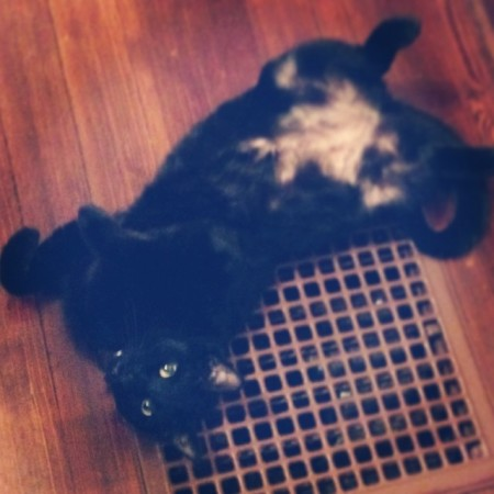 Ya! Whatcha want? It's my vent, find your own! #cats #black  - Instagram