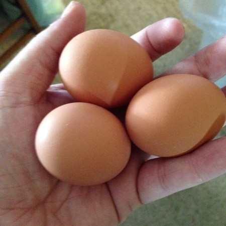 Our first #eggs ... Looks like we have 3 hens!  - Instagram