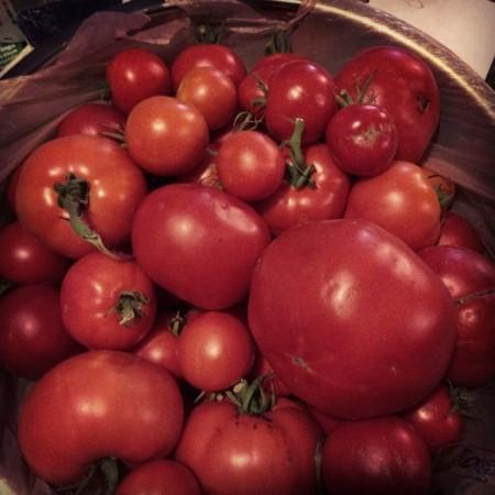 Today's tomato harvest. #garden #wryt #foodporn  - Instagram